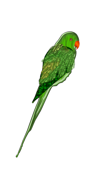 Free vector graphic Parrot Green Bird Wings Tail