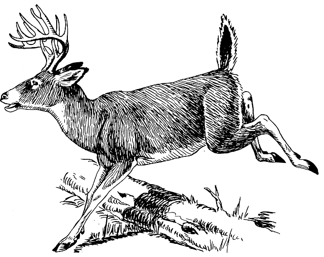 Deer Log Jumping 183 Free Vector Graphic On Pixabay