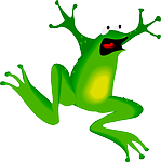 frog, face, amphibian
