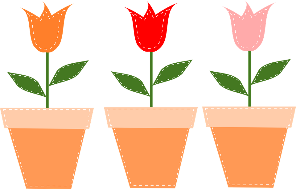 Free vector graphic flower pots pots tulips flowers free image
