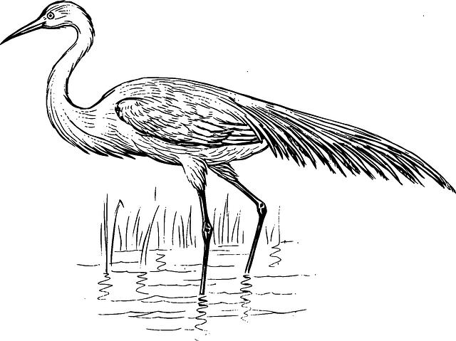 egret water bird 183 free vector graphic on pixabay