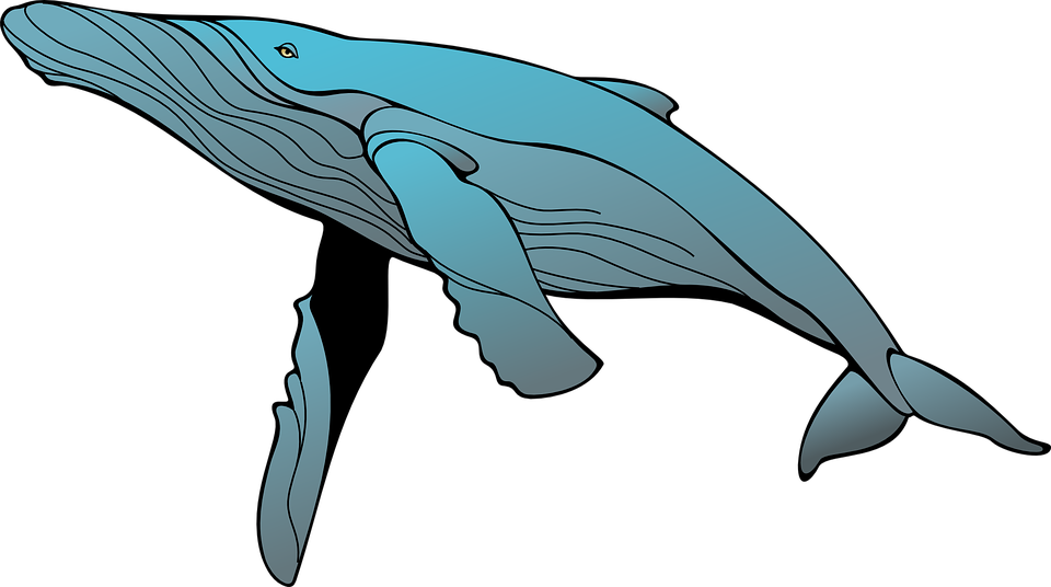whale blue swimming free vector graphic on pixabay rh pixabay com humpback whale clip art free