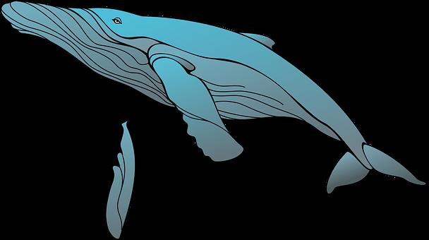 300 Kostenlose Wale Meer Illustrationen Pixabay