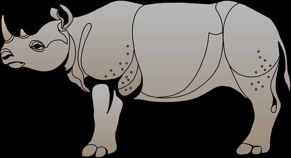 Image vectorielle gratuite rhinoc ros gris vue corne c t image gratuite sur pixabay 48364 - Decoration de grand vase transparent ...