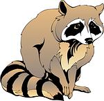 raccoon, sitting, animal