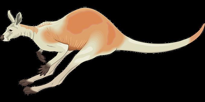 30 Free Marsupial Kangaroo Vectors Pixabay