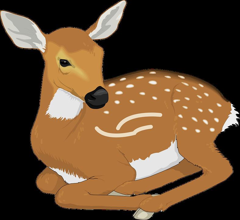 Free vector graphic: Deer, Animal, Mammal, Spots - Free ...