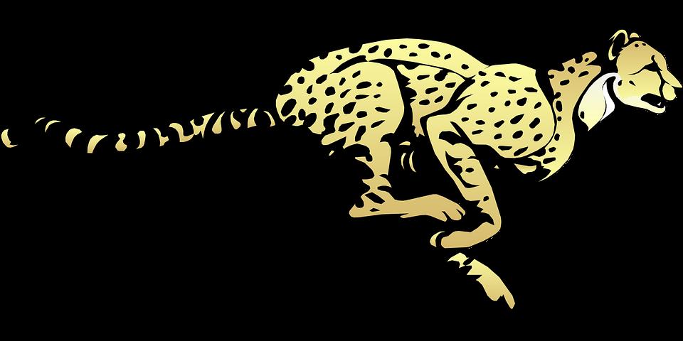 cheetah running speed free vector graphic on pixabay rh pixabay com