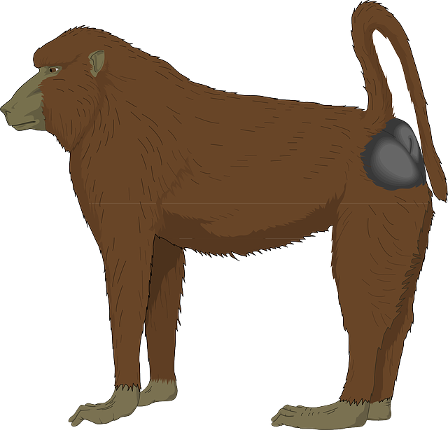baboon brown long 183 free vector graphic on pixabay