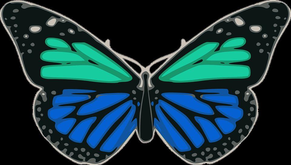 Mariposa azul turquesa gr ficos vectoriales gratis en for Cartamodello papillon