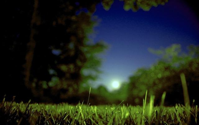 Moon Moonrise Summer 183 Free Photo On Pixabay