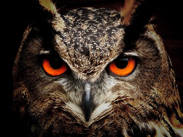 Глаза филина