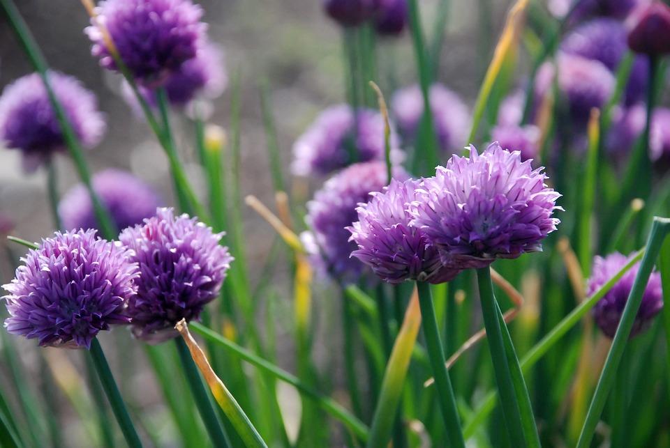 kostenloses foto blumen lila natur blume bl ten kostenloses bild auf pixabay 50447. Black Bedroom Furniture Sets. Home Design Ideas
