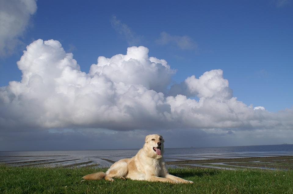 Hund, Nordsee, Deich, Nordfriesland