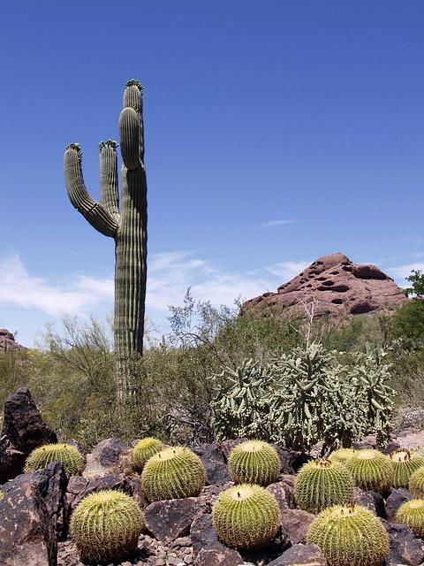 Free photo: Cactus, Plant, Rocks, Hill, Desert - Free ...