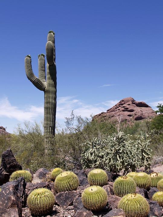 kostenloses foto kaktus pflanze felsen h gel kostenloses bild auf pixabay 50622. Black Bedroom Furniture Sets. Home Design Ideas