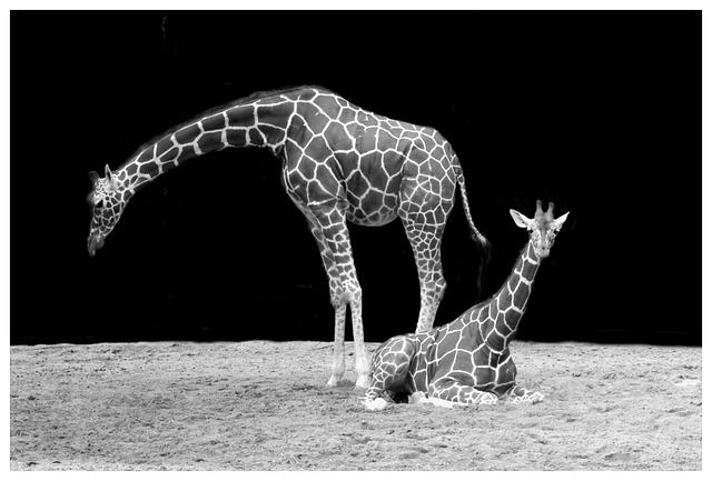 Free photo Giraffe, Neck, Animal  Free Image on Pixabay