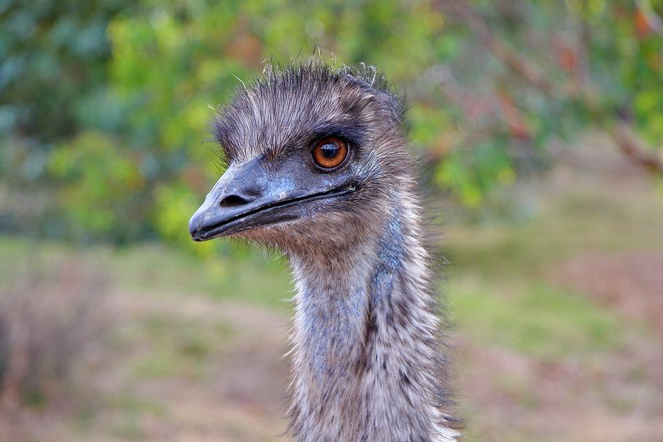 emu dansk