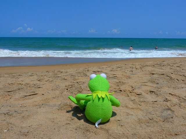 Kermit pics frog of the