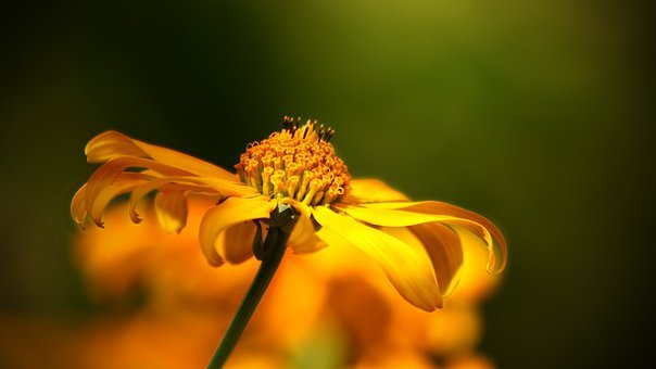 Yellow flowers images pixabay download free pictures flower wild flower yellow orange mightylinksfo