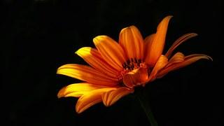Fleur, Fleur Sauvage, Fleurs, Nature