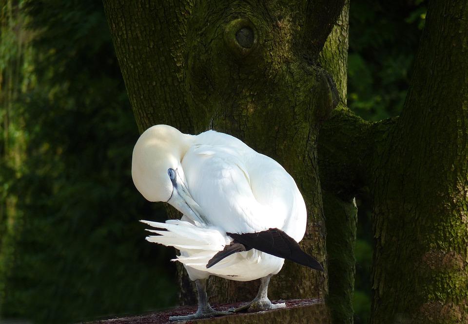 Blázon veľké vtáky