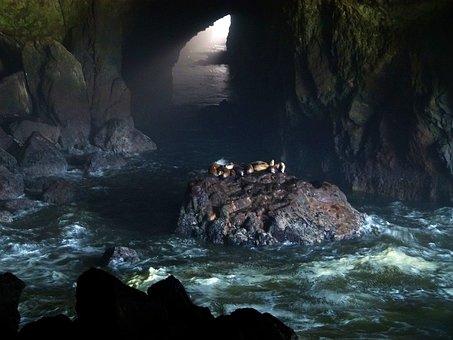 Sea Lions Cave, Seals, Sea Lions, Cave