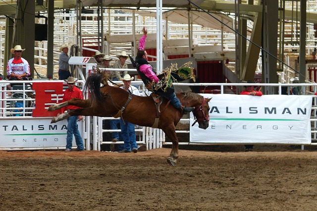 Free Photo Calgary Stampede Competition Free Image On