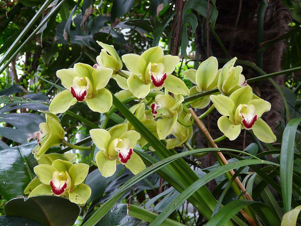 free photo orchid, flower, bloom, tropical  free image on, Beautiful flower