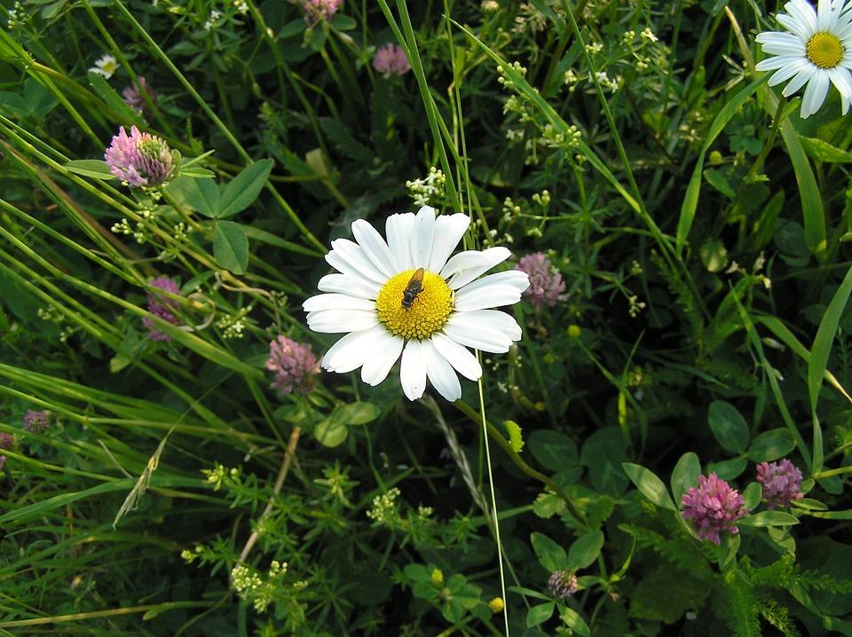 Natuur Planten Gratis Foto Op Pixabay