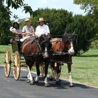 Horses, Carriage, Tourist