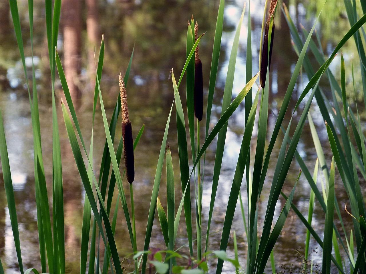 болотная растительность фото картинки центре