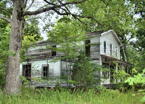 Abandoned log cabin invaded by weeds and trees