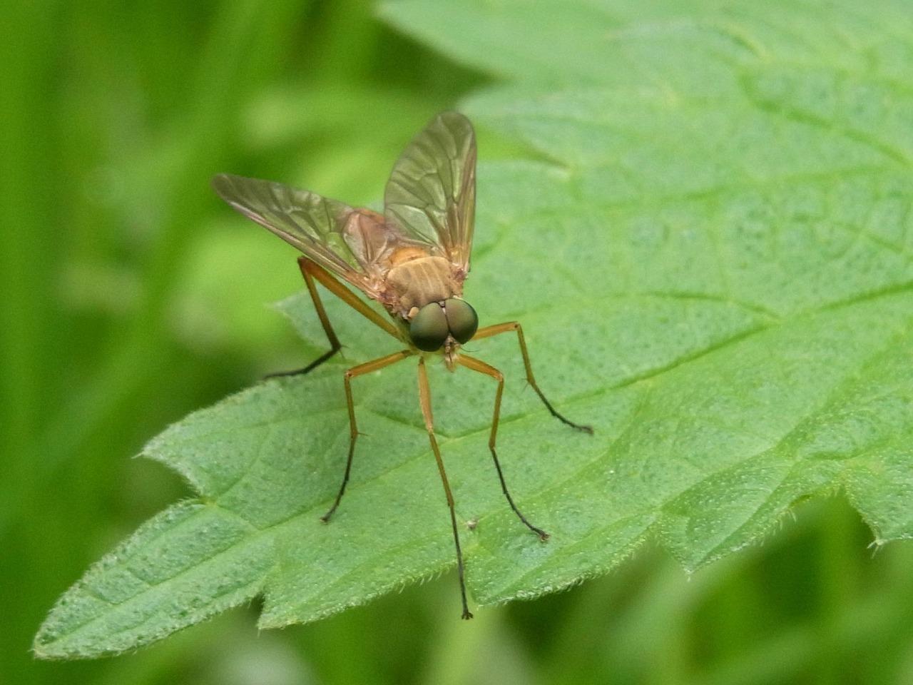 что комары в природе картинки можно