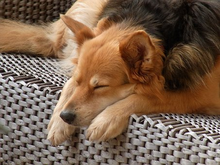 Hond, Ronni, Ronja, Dierlijke, Slaap