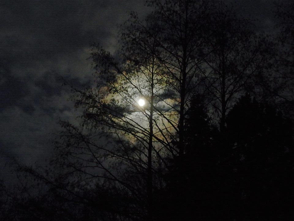 Le rossignol - Paul Verlaine Moon-54671_960_720