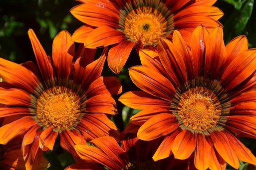 flores flor naranja planta jardn