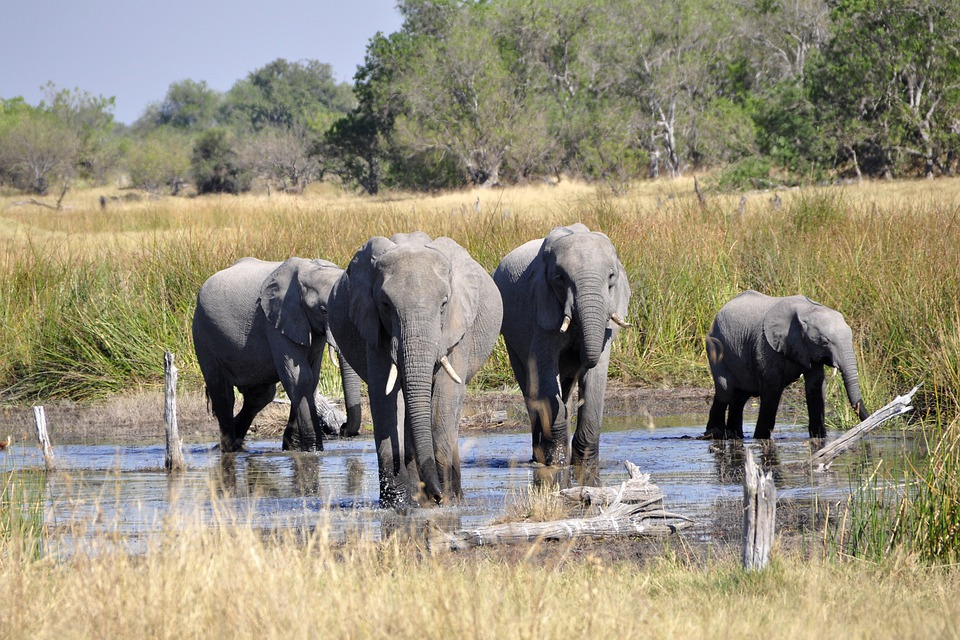 afrikanza-okavango-elephants