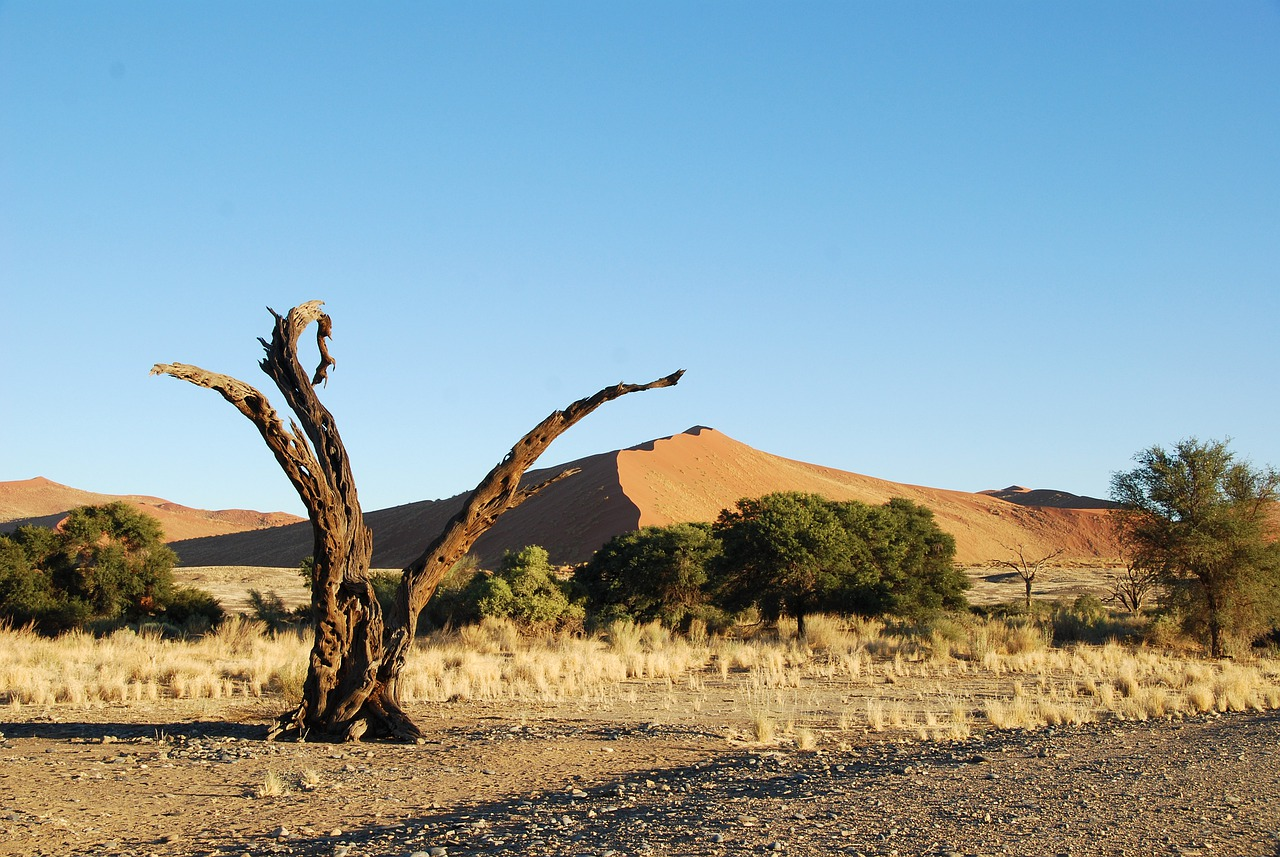 desertification which hampers development in namibia Vulnerability to desertification in africa is assessed using the information on soils, climate, and the previously evaluated land resource stresses desertification is, land degradation in arid, semi-arid, and dry sub-humid areas resulting from various factors, including climatic variations and human.