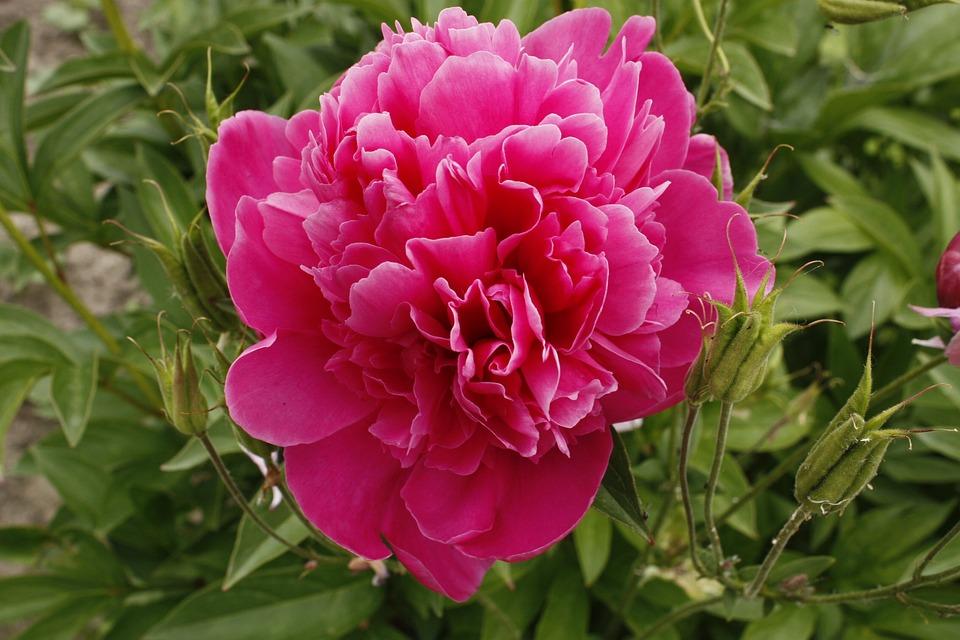 Fiore Viola Grande Foto Gratis Su Pixabay