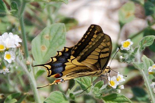 Mariposa, Encajar, Insectos, Amarillo