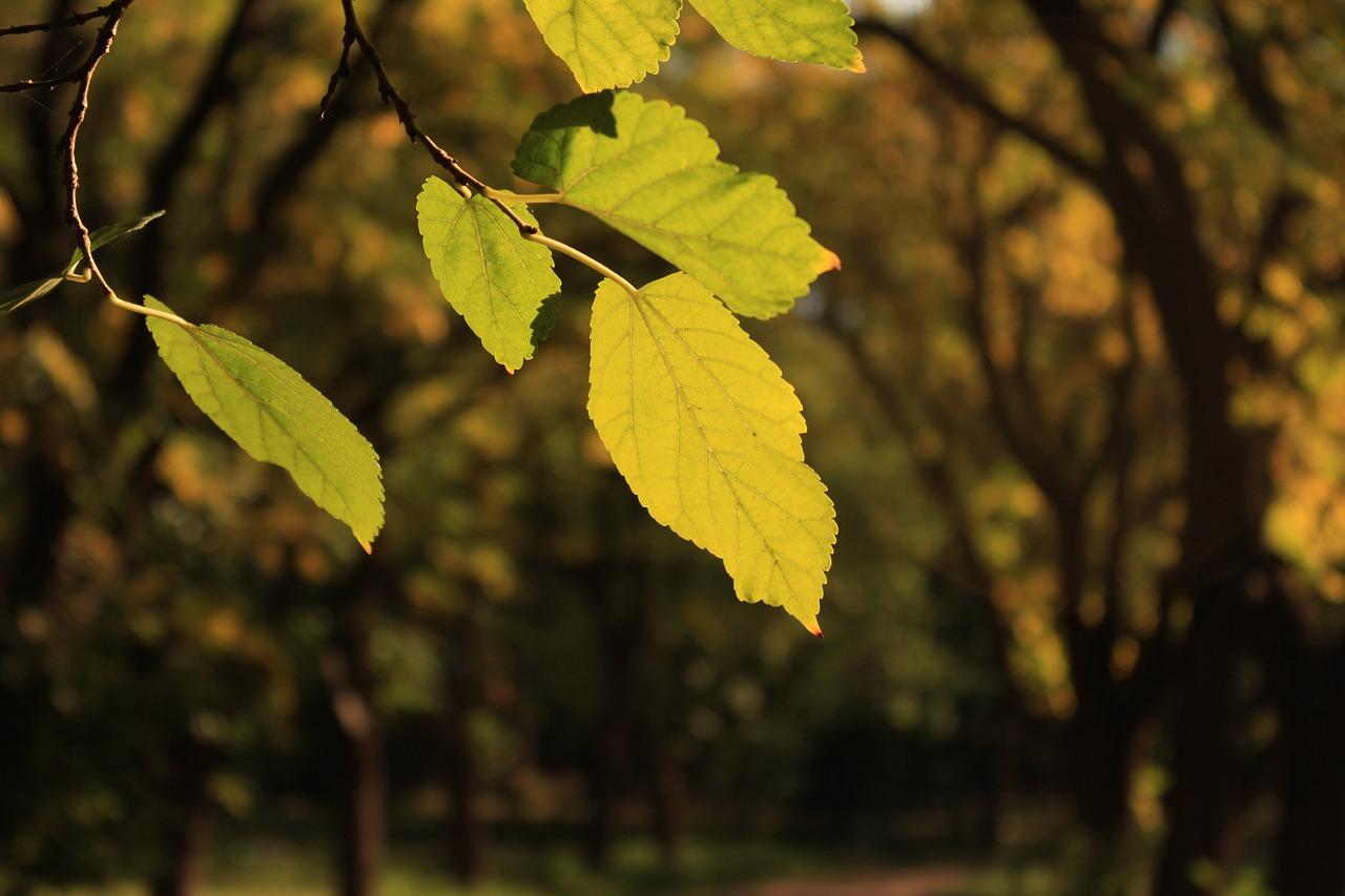 концу картинка фото дерева и листьев найти максимально удобную