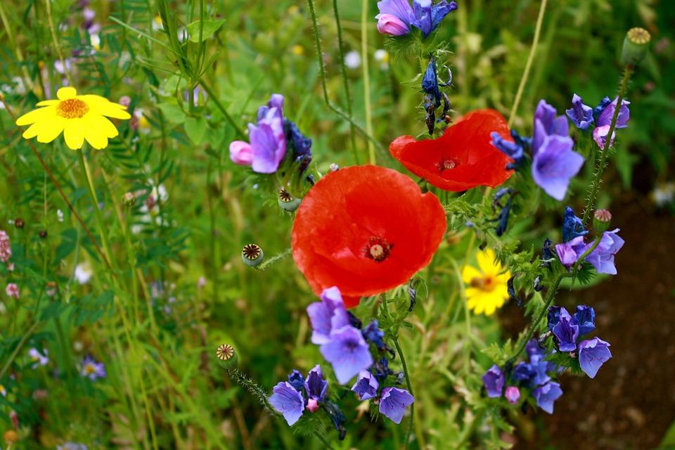 Обои на рабочий стол полевые цветы красивые