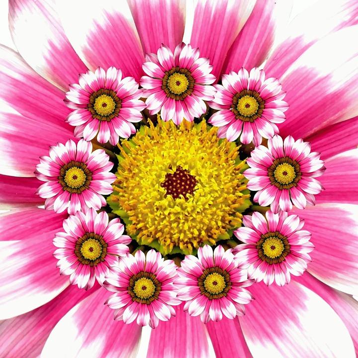 Musim Panas Bunga Alam Kolase Warna Merah Muda