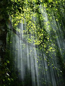 trees images pixabay download free pictures