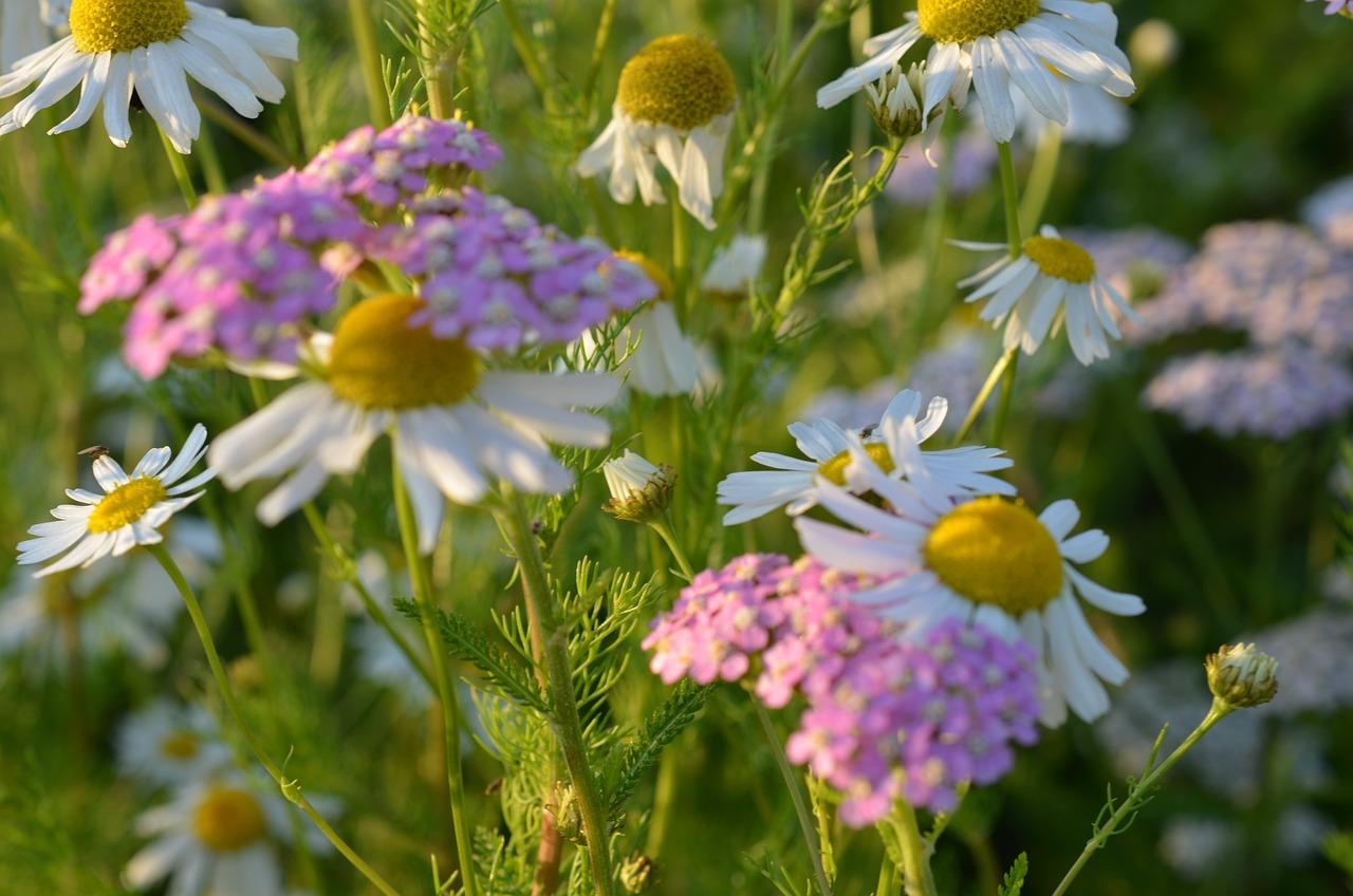 Фото открытка цветы луговые, картинки инструктор