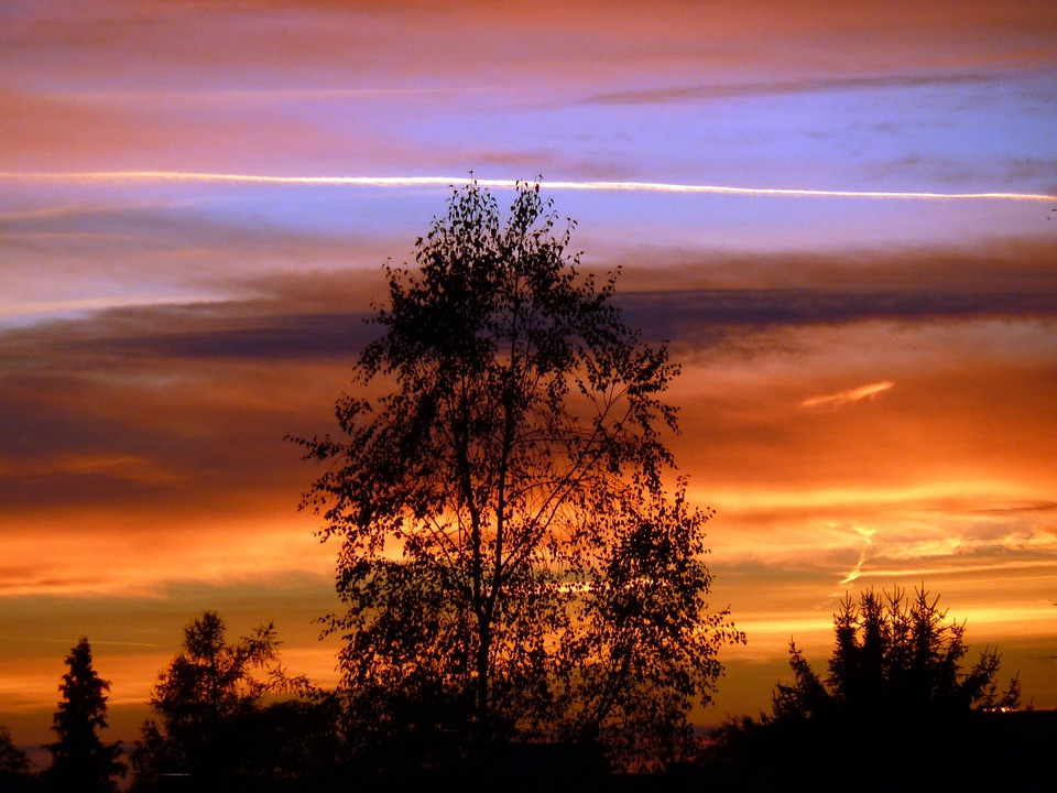 Free photo: Sunset, Tree, Branches, Sky, Clouds - Free Image on ...
