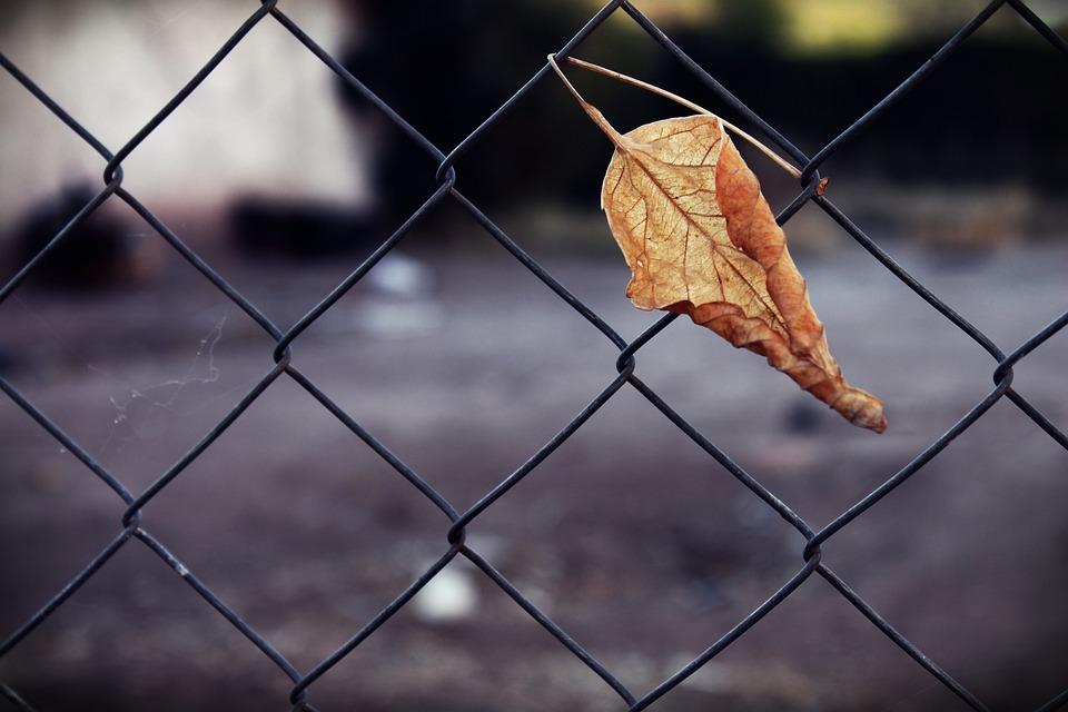 Gefangen Trockene Blatt Trocken · Kostenloses Foto auf Pixabay