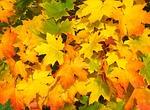 liście, jesień, upadek