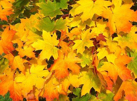 leaves-57427__340.jpg
